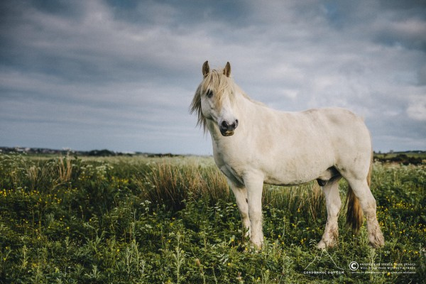 The horse that lives by the river