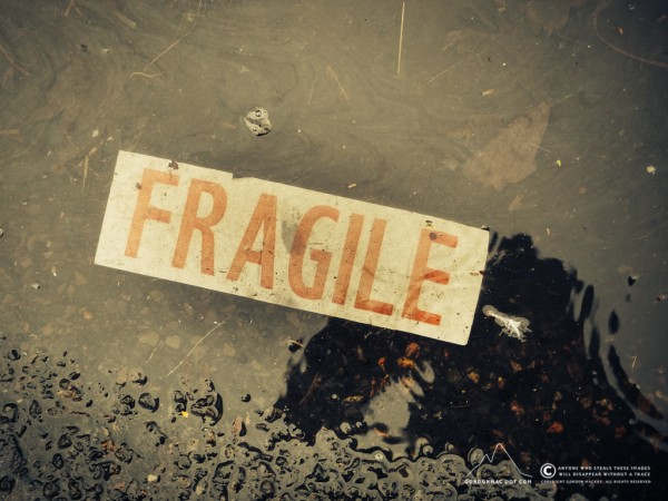 023/365 - Puddle contents