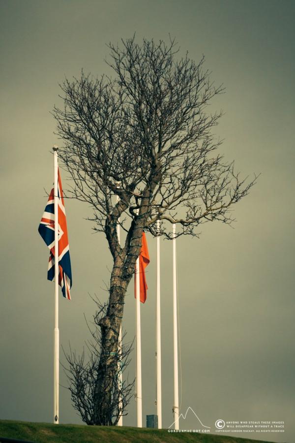 126/365 - Memorial flags
