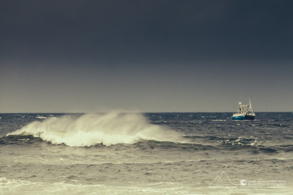 143/365 - Rois Maria (OB 48) in Wick Bay
