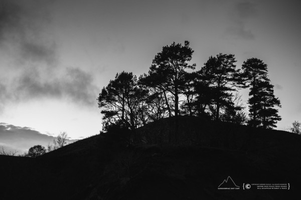 Scots pine silhouettes - Dunbeath Strath 2/1/2013