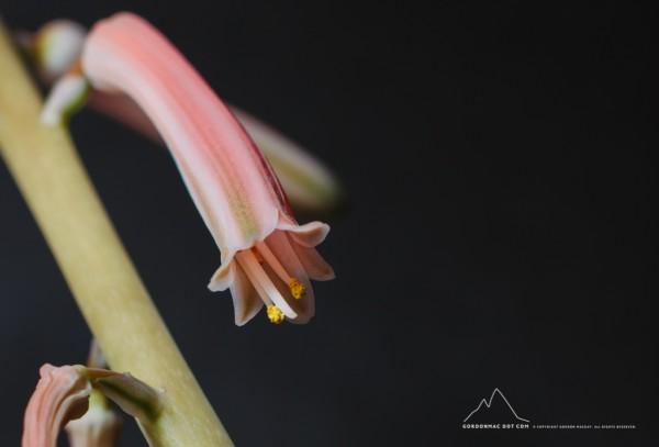 014/365 - Aloe