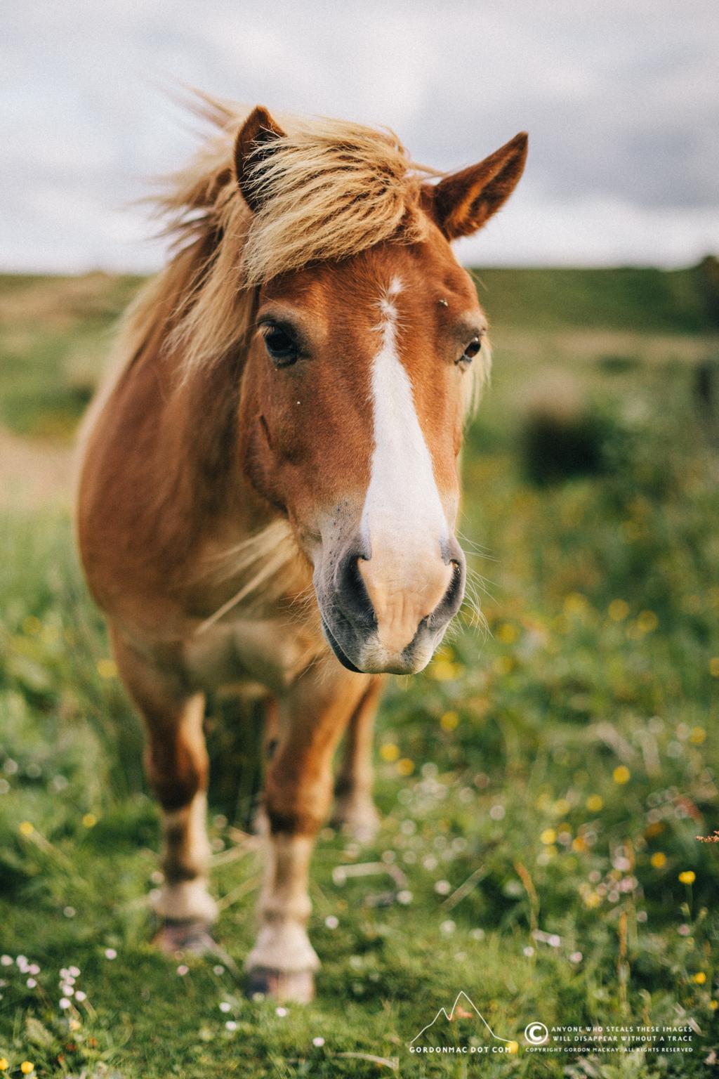 The horse's sidekick