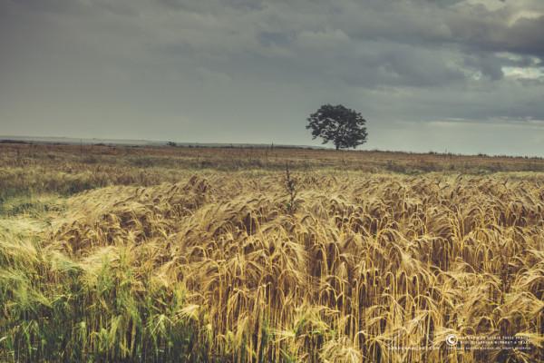 211/365 - A field