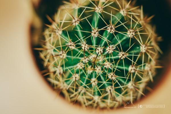 021/365 - Cactus
