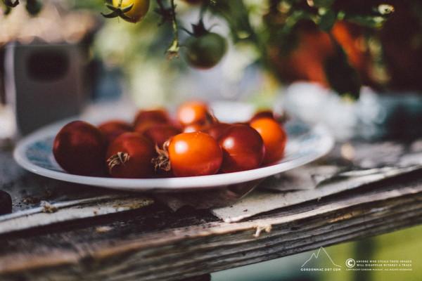 My Mum's tomatoes