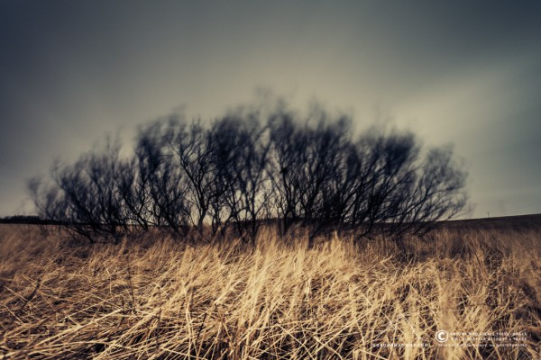 067/365 - A 214 second exposure of trees in the wind… I quite like it.